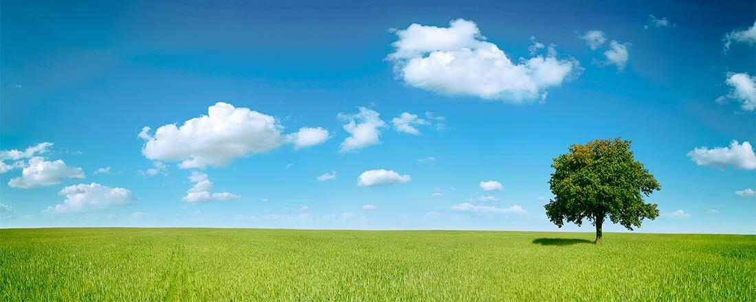 Wiese mit blauem Himmel und Laubbaum